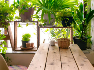 The urban jungle: how millennials are driving a houseplant revival